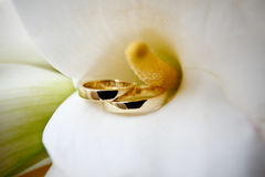 Wedding rings in calla Stock Photography