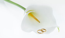 Wedding rings & Calla Lily. Wedding rings on the Calla Lily Stock Image