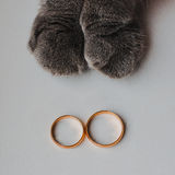 Wedding rings and cat Royalty Free Stock Photos