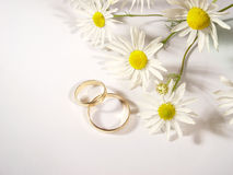 Wedding rings and chamomile Royalty Free Stock Photos