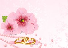 Wedding rings and cherry blossom Royalty Free Stock Image
