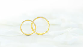 Wedding rings. Close up of wedding rings on background white petals of rose Stock Photography