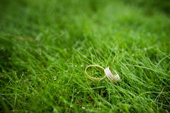 Wedding rings close-up in the grass Stock Photos