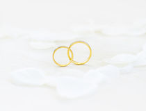 Wedding rings. Close-up Wedding rings and white petals Royalty Free Stock Photography
