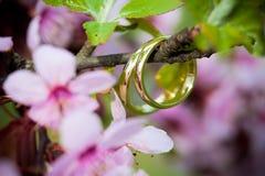 Wedding rings closeup Stock Photography