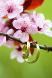 Wedding rings closeup with the pink flowers Royalty Free Stock Image