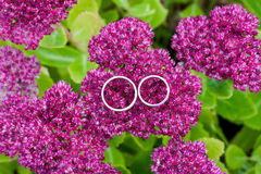 Wedding rings closeup Royalty Free Stock Photo