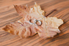 Wedding rings. Closeup of two white  wedding rings background. Autumn leaf Royalty Free Stock Photography