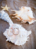 Wedding rings on cockleshells. Wedding rings and cockleshells on sand Royalty Free Stock Photos