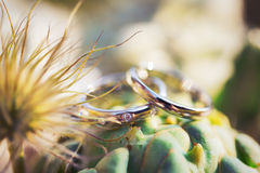 Wedding rings in the colors of a cactus Royalty Free Stock Photo