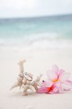 Wedding rings on coral in front of the seaside Stock Images