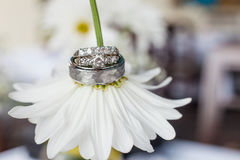 Wedding rings on a daisy flower. Wedding rings on a daisy flower Stock Photography