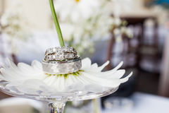Wedding rings on a daisy flower. At reception Stock Image