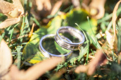 Wedding rings with diamonds on the leaves Stock Images