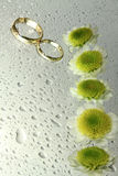 Wedding rings with drops and chrysanthemums Stock Photography