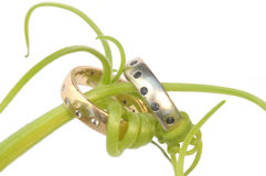 Wedding rings entwined Stock Photography