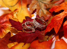 Wedding rings on fall leaves Stock Photography