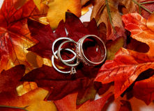 Wedding rings on fall leaves Royalty Free Stock Images