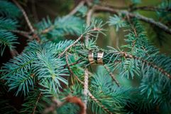 Wedding rings on fir branch royalty free stock photos