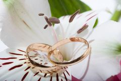 Wedding rings in flower. Royalty Free Stock Photography