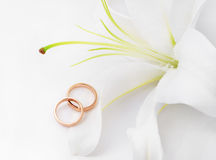 Wedding rings & flower. Wedding rings and flower lily Royalty Free Stock Image