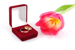 Wedding Rings and Flower. Tulip next to a red velvet box with two gold wedding bands royalty free stock photo