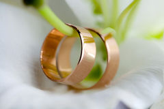 Wedding rings. On the flower Stock Image