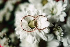 Wedding rings on a flower. Close up Wedding rings on a white flower Stock Image