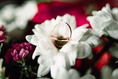 Wedding rings on a flower. Close up Wedding rings on a white flower Royalty Free Stock Images