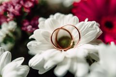 Wedding rings on a flower. Close up Wedding rings on a white flower Royalty Free Stock Image