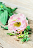 Wedding rings. And flower of  Eustoma Stock Photography