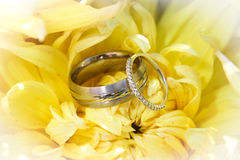 Wedding rings on flower Royalty Free Stock Photos