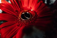 Wedding rings on a flower. Wedding rings on a red flower Royalty Free Stock Photos