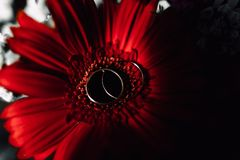 Wedding rings on a flower. Wedding rings on a red flower Stock Images