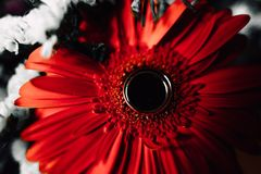Wedding rings on a flower. Wedding rings on a red flower Stock Image