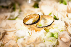 Wedding rings on flower of rose Royalty Free Stock Image