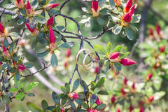 Wedding rings in the flowering branches Stock Image