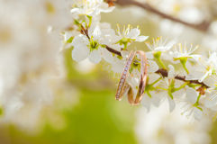 Wedding rings on a flowering tree Royalty Free Stock Photo