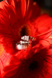 Wedding Rings and Flowers Royalty Free Stock Photo