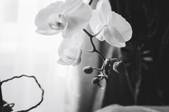Wedding rings on flowers. 1 Stock Images