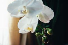 Wedding rings on flowers. 1 Stock Image