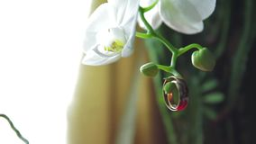 Wedding rings on flowers. 1 stock video footage