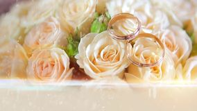 Wedding rings with flowers stock video footage