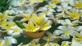 Wedding rings on flowers in a water. Wedding rings on flowers and leafes in a water stock video