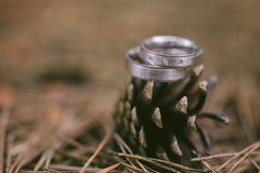 Wedding rings in forest with blury background. Wedding rings in forest with blury brown background royalty free stock photography