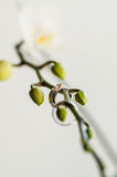 Wedding rings. Wedding gold rings on a flower, white gold Royalty Free Stock Images
