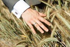 Wedding rings gold outdoors. Two Royalty Free Stock Photos