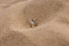 Wedding rings.   gold wedding rings on the sand Royalty Free Stock Photography