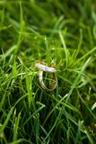 Wedding rings on a grass. Pair of wedding rings. Very shallow depth of field Stock Photography