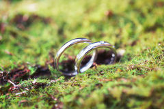Wedding rings in the grass Stock Photo